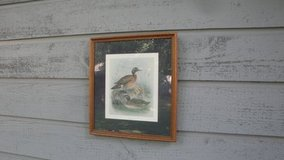 duck picture 19 x 17 inches in The Woodlands, Texas